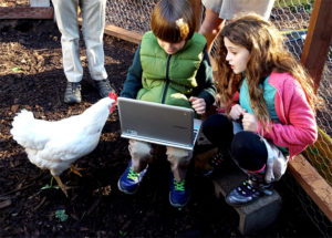 chickens_technology_sunshine_sam_lexie_630x451